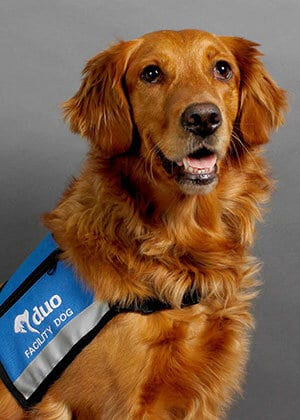 Java friendly facility dog